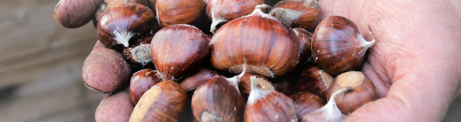 中部イタリア・トスカーナの大自然の恵みフルーツスプレッド・コンフィチュールは伝統&モダン融合のレシピ